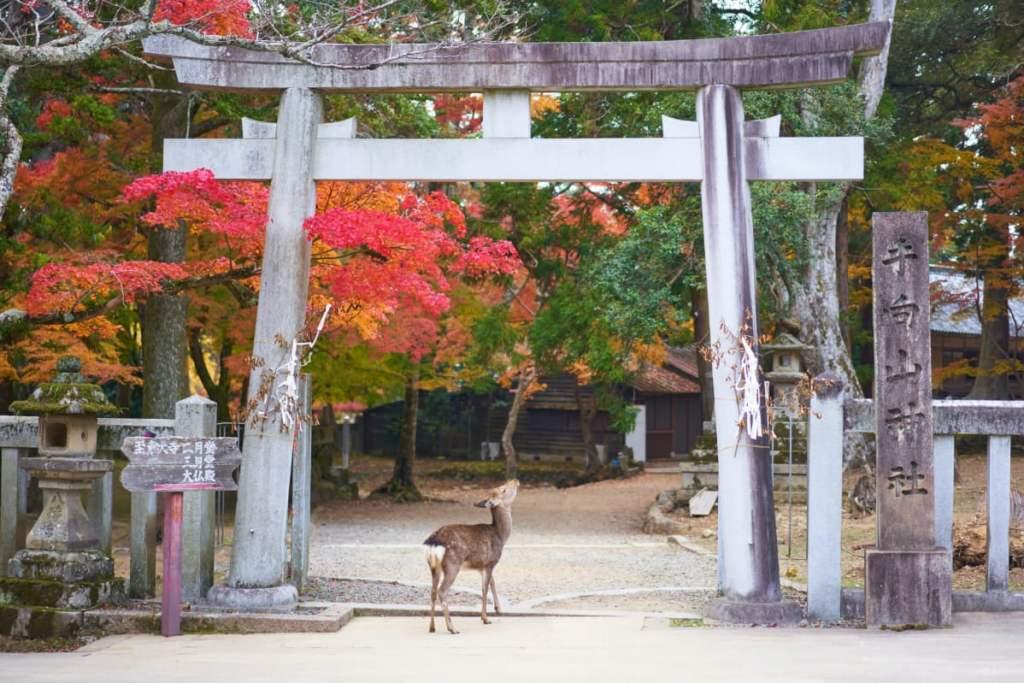 Nara: Qué visitar en Japón