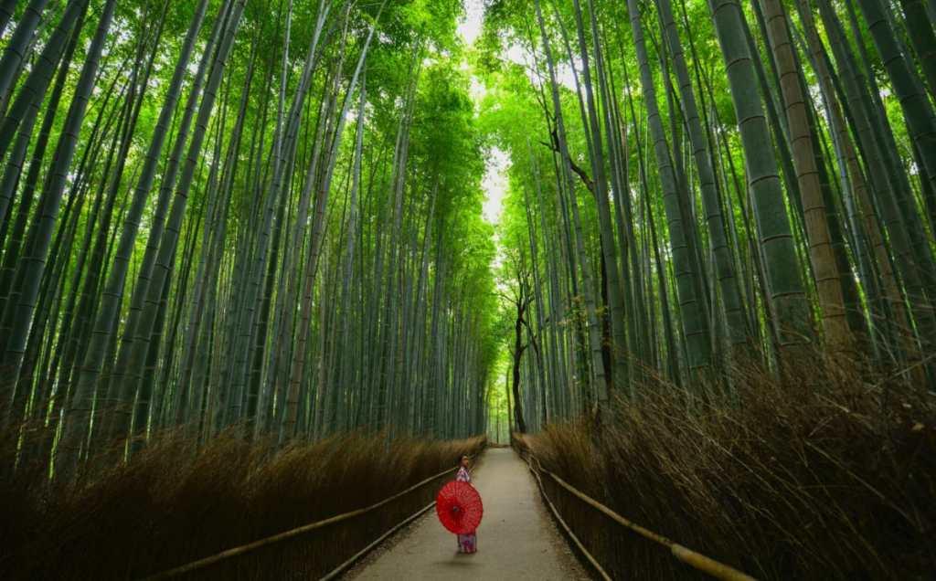 Bosque de bambú - Kioto