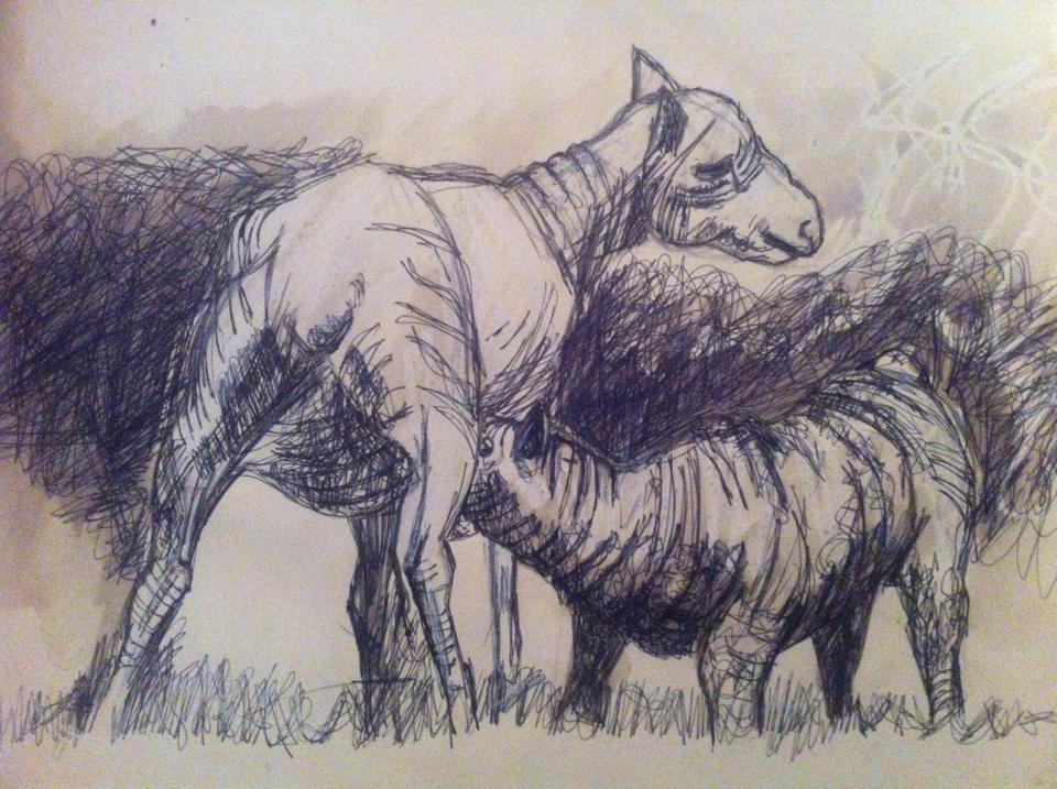 Sheep Drawing 1