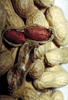 frutto e semi di arachide