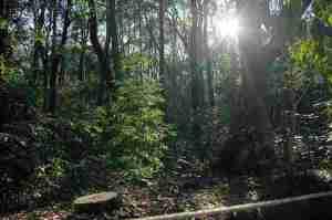 森の中_R
