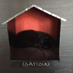 maison pour chat en carton