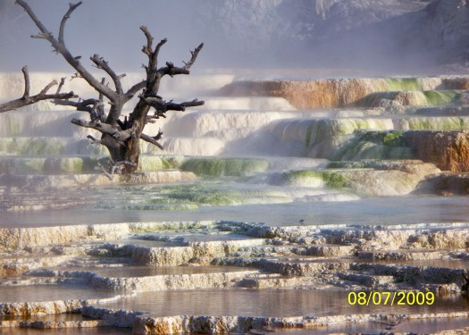 (My Photo)Mammoth Hot Springs, Yellowstone Info.