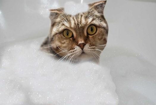 kittybubblebath
