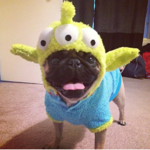 Little Green Man Pug