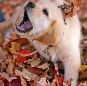 Puppy playing in the leaves