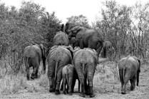 Bouchon d'éléphants!