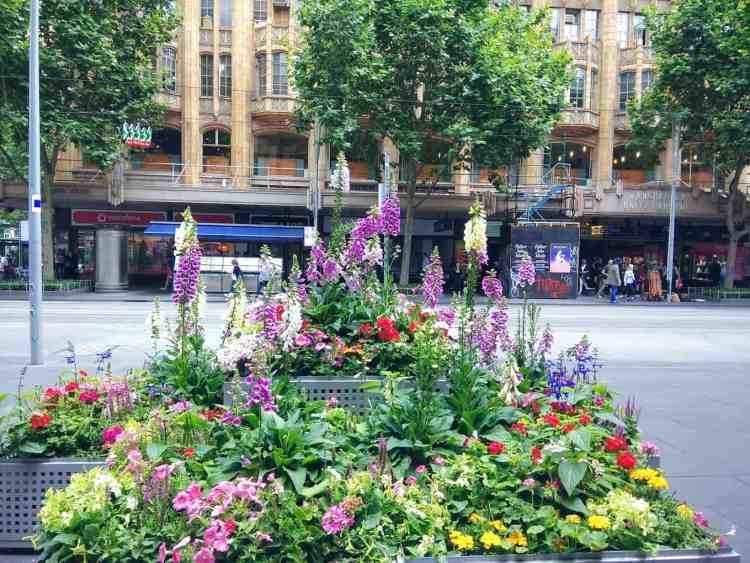 Side walk flowers Melbourne