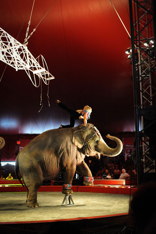 An elephant performing in a circus act.