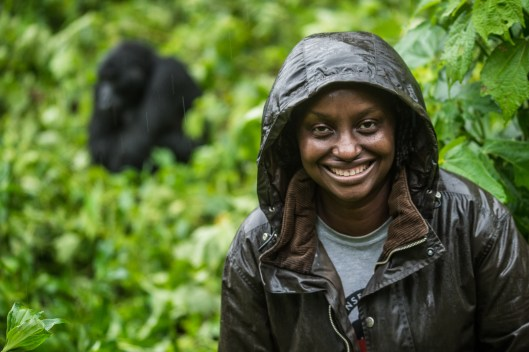 Dr. Gladys with a wild but habituated gorilla in Bwindi Impenetrable forest.