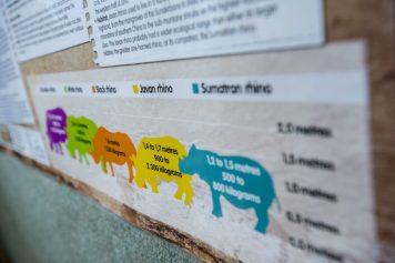 Rhino education program