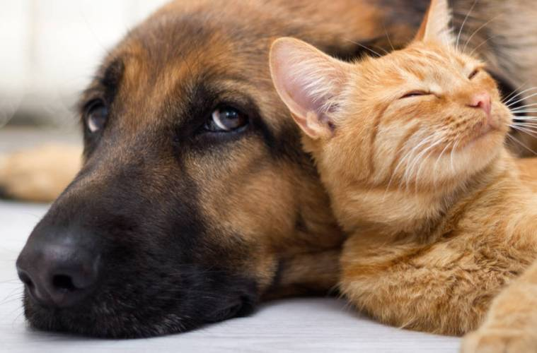 US bans dog & Cat Slaughter_UnBumf