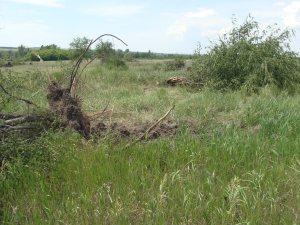 На Луганщині охоронну зону заповідника готують до оранки!