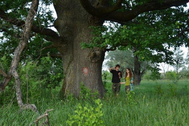 300-400-річна діброва на Житомирщині стала заказником!