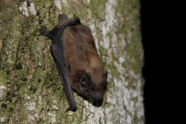 Сенсаційна знахідка під час обліків кажанів Боярської ЛДС