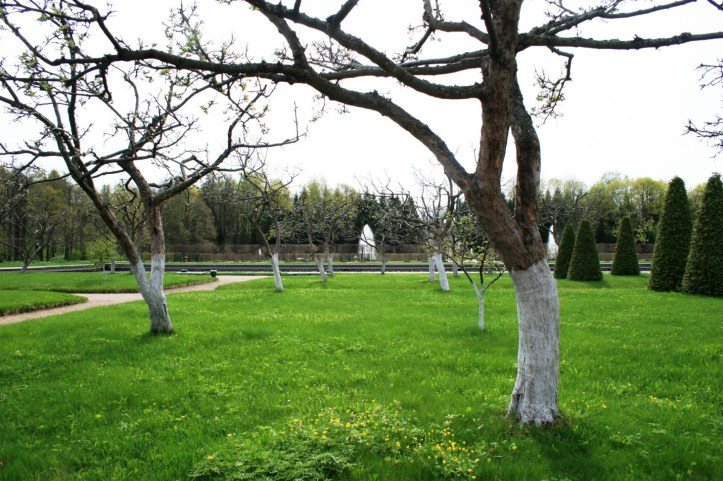 trees-with-whitewash