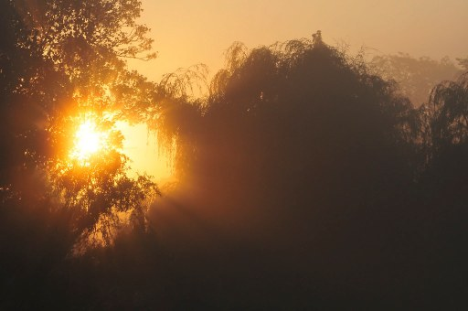 breaking dawn 1