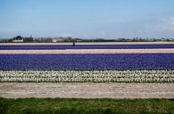 FlowerFields2-1