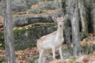 Les jeunes animaux sont maintenant confiants et peuvent sortir de leur cachette.