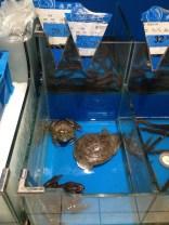 Des grenouilles et tortues prêt à consommer au supermarché du coin...