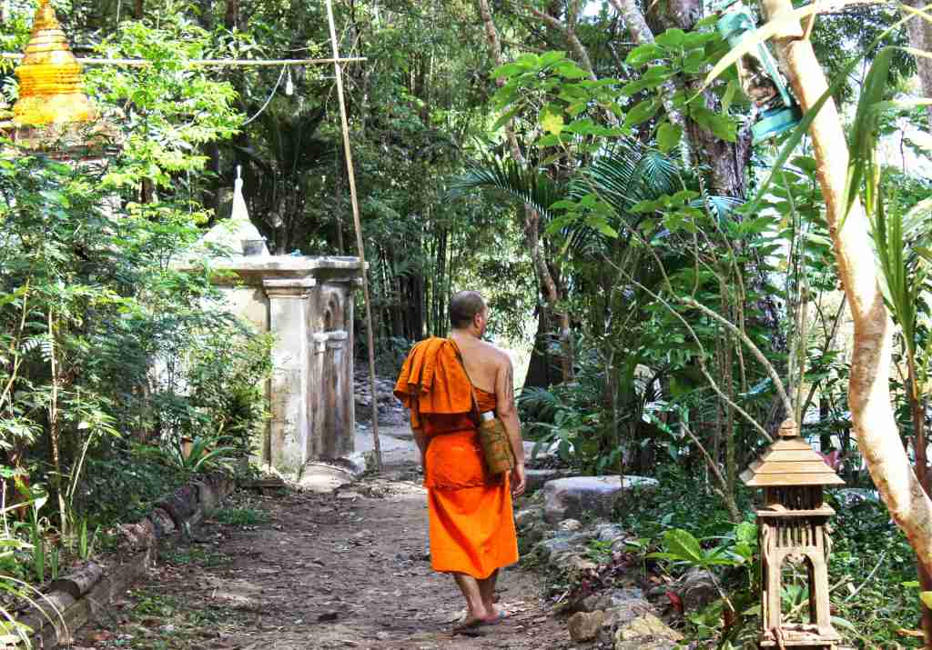 A temple enveloped by jungle with monks around