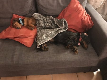 Puppies napping - (un)Conventional Bookviews - Weekend Wrap-up
