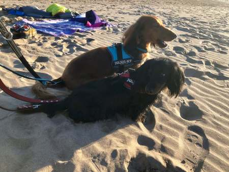 Hercules and Freddy on the beach - (un)Conventional Bookworms - Weekend Wrap-up