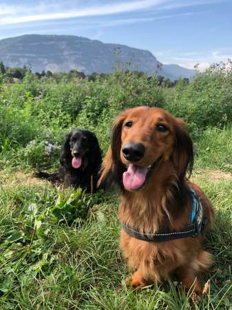 Happy Puppies - Weekend wrap-up - (un)Conventional Bookworms