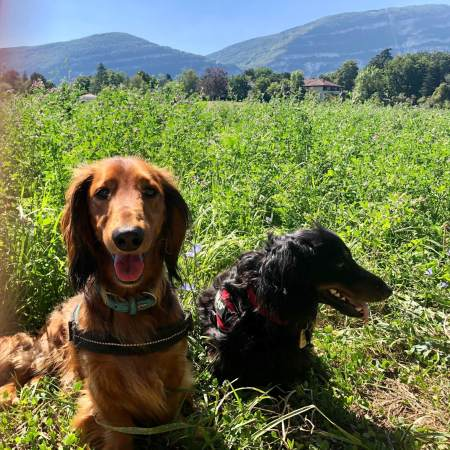 Happy pups - (un)Conventional Bookworms - Weekend Wrap-up