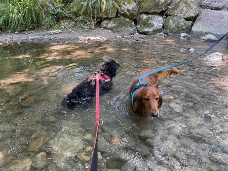 Puppies cooling down - (un)Conventional Bookworms - Weekend Wrap-up
