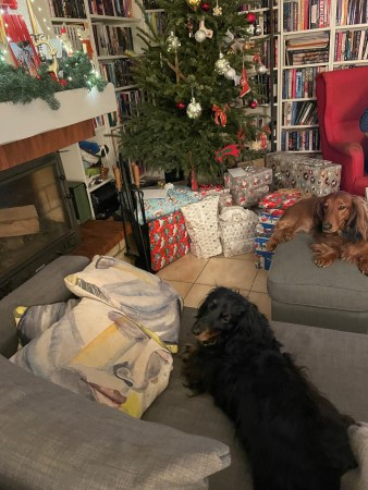 Christmas Puppies - (un)Conventional Bookworms - Weekend Wrap-up