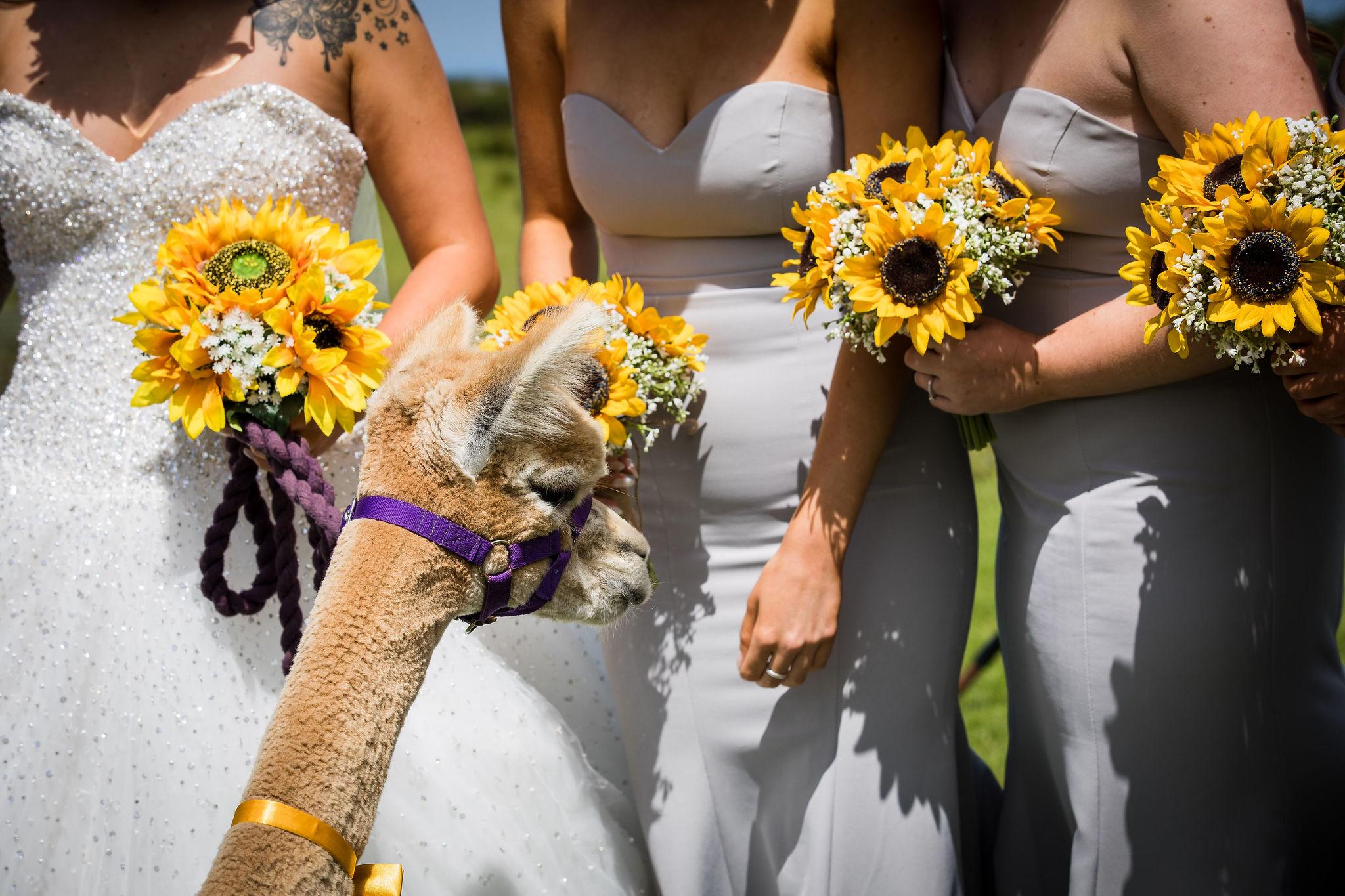 Harriet&Rhys Wedding - Magical sunflower wedding - quirky wedding with dodgems (64)