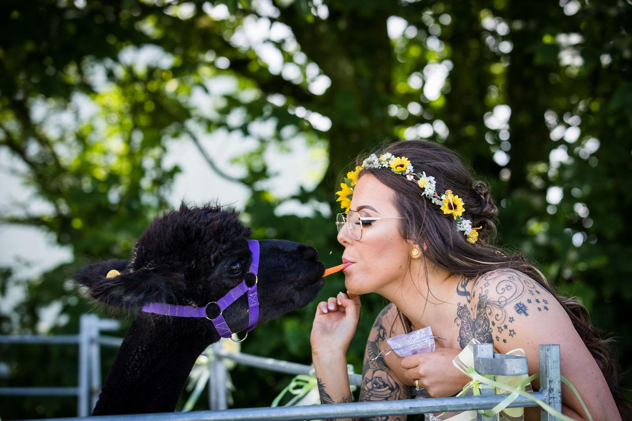 Harriet&Rhys Wedding - Magical sunflower wedding - wedding alpacas with bride
