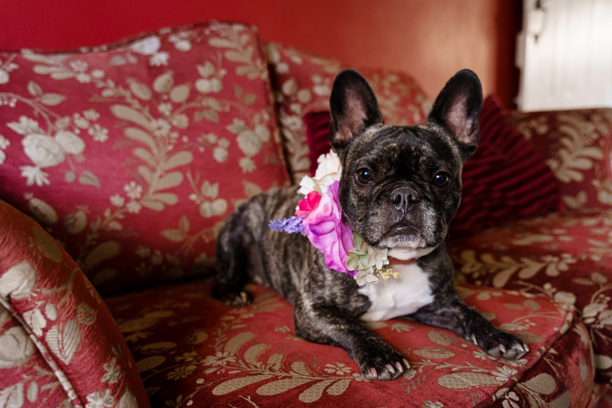 dog friendly wedding- dogs at weddings- katherine and her camera- dog wedding accessories-unconventional wedding- wedding planning advice- pets at weddings-dog flower crown