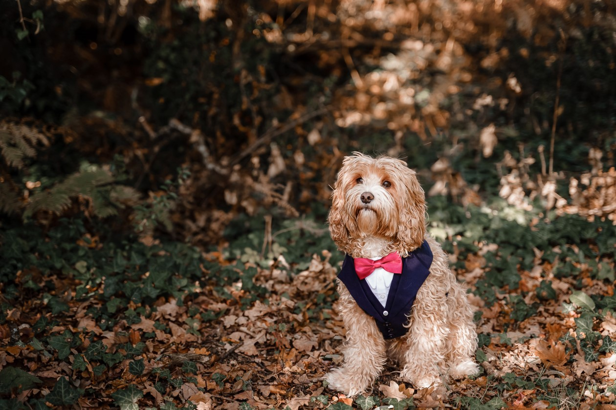 dog friendly wedding- dogs at weddings- katherine and her camera- dog wedding accessories-unconventional wedding- wedding planning advice- pets at weddings- dog tuxedo