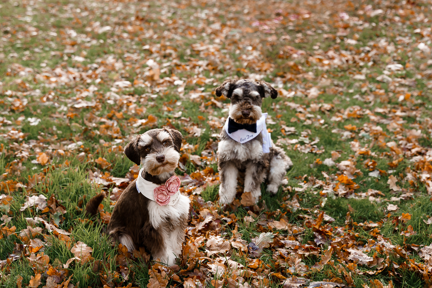 dog friendly wedding- dogs at weddings- katherine and her camera- dog wedding accessories-unconventional wedding- wedding planning advice- dog friendly photographer