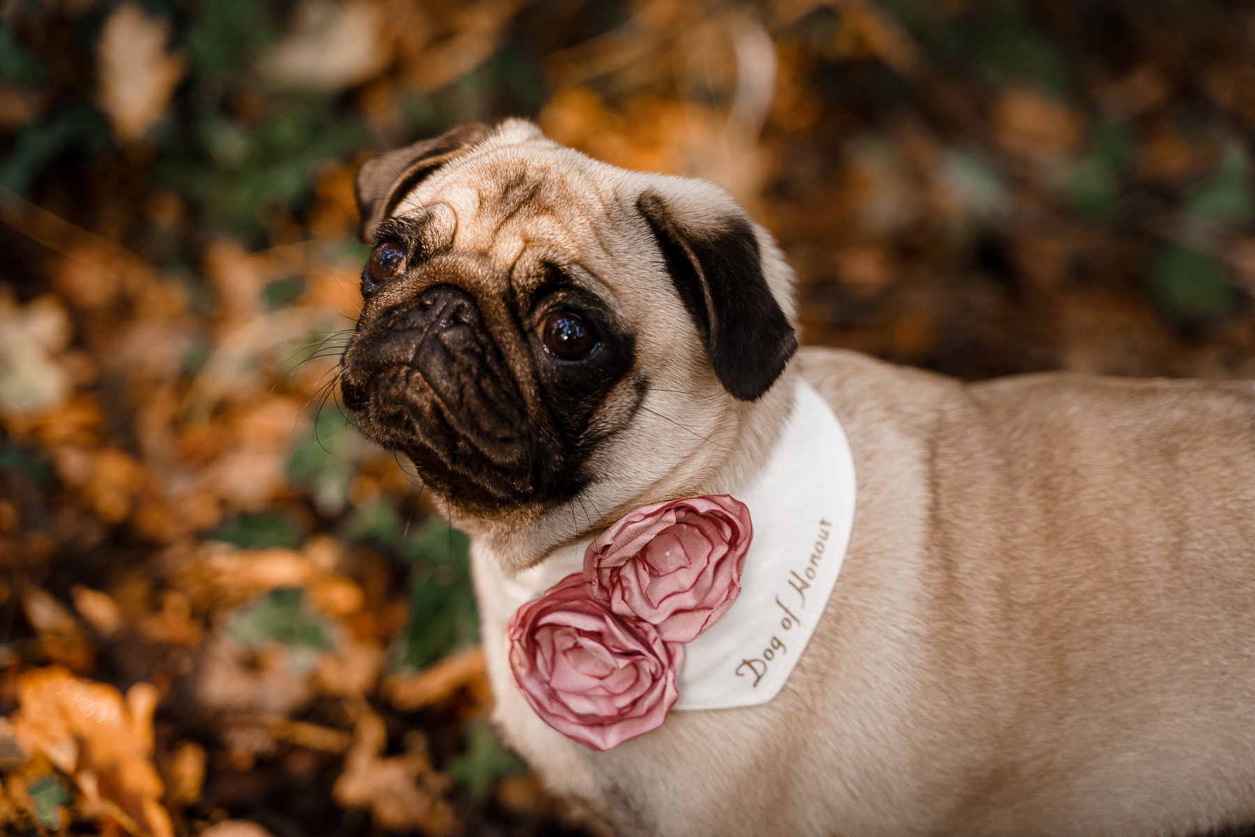 dog friendly wedding- dogs at weddings- katherine and her camera- dog wedding accessories-unconventional wedding- wedding planning advice- pets at weddings- dog of honour