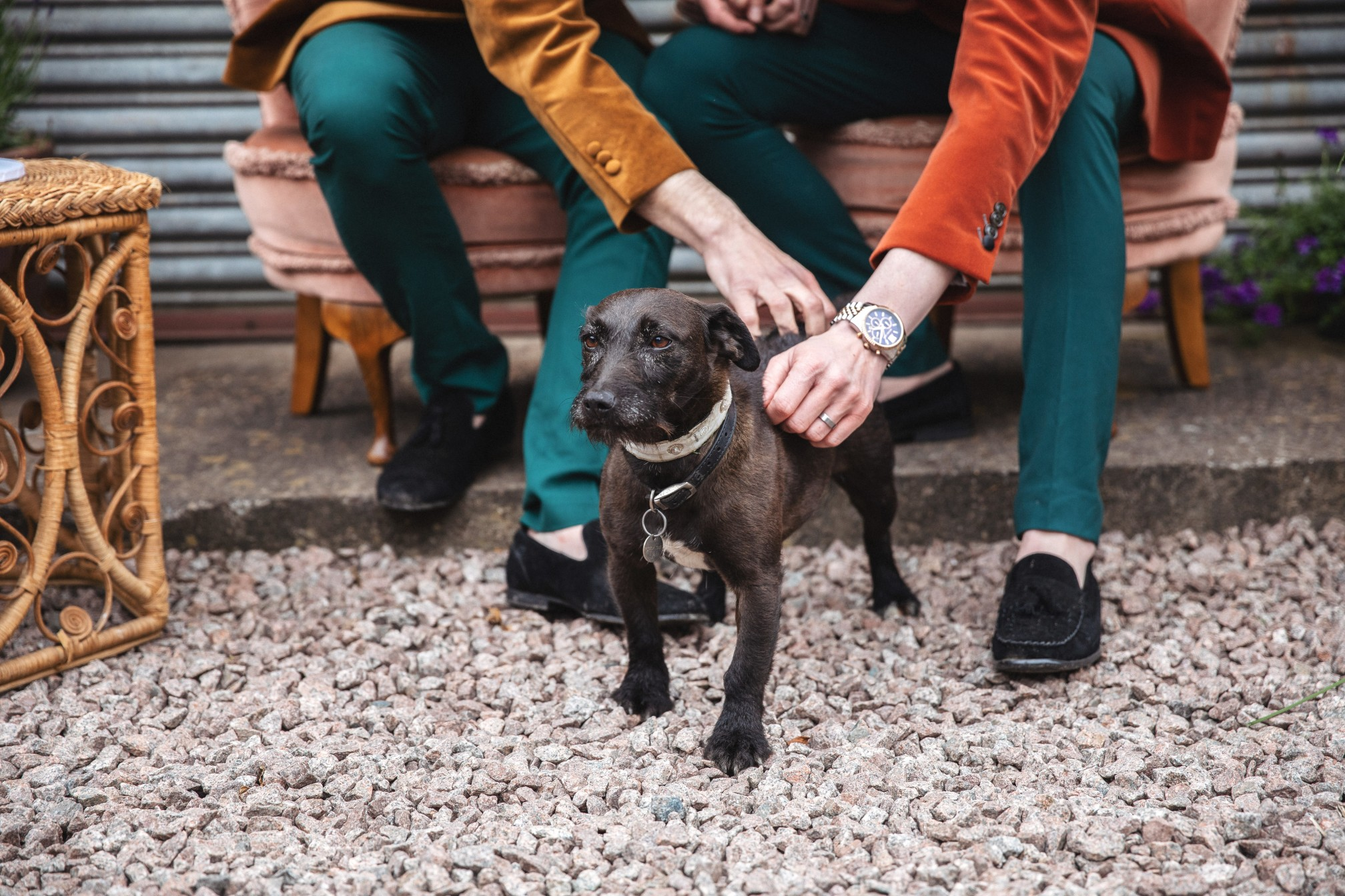unique grooms wear - dogs at weddings - unique grooms style