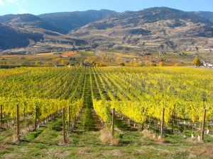 Photo Credit: Oliver Osoyoos Wine Country