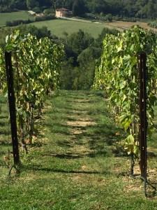 Antinori nel Chianti Classico Vineyard, Bargiano