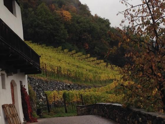 house + vines