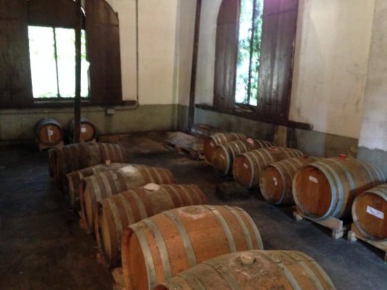 vin santaio