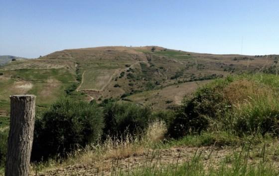 other vineyard