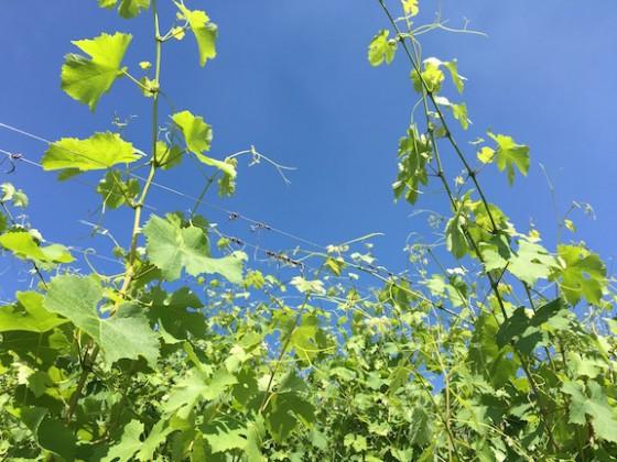 happy vines copy