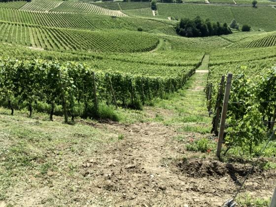 lower vine