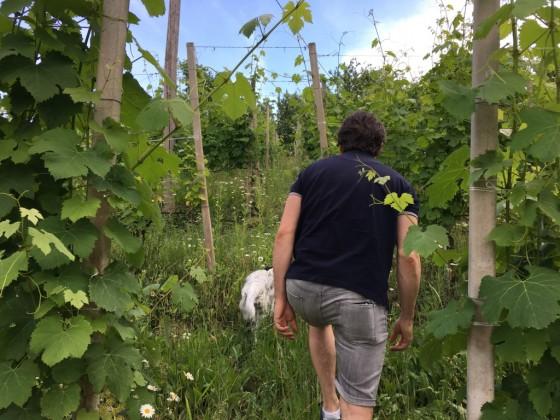 vines up