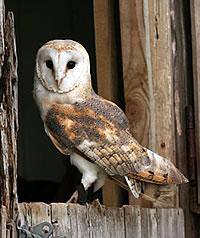 owl_inset