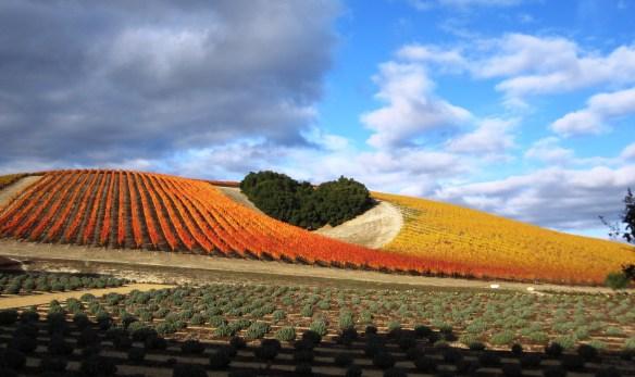 Vineyards-Heart_Hill2