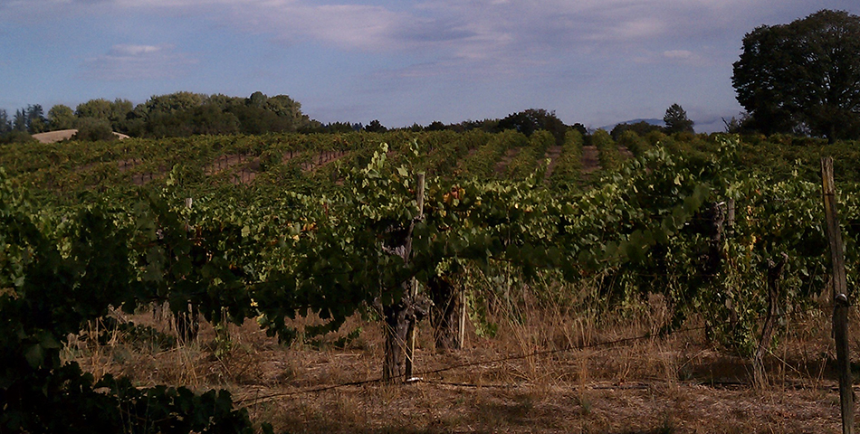 BacigalupiVineyards_slideshow