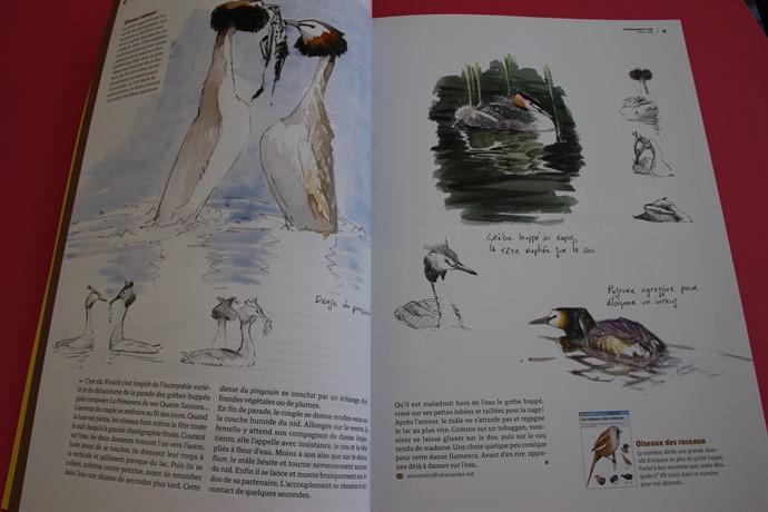 Pages du magazine La Salamandre